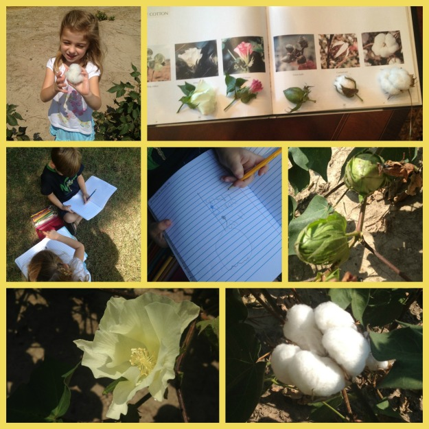 cotton collage